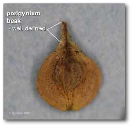 perigynia_beak_well_defined